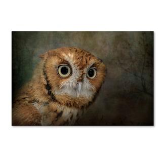 Jai Johnson 'Portrait Of An Eastern Screech Owl' Canvas Art