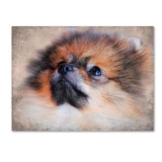 Jai Johnson 'Pomeranian Portrait' Canvas Art