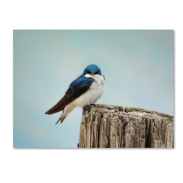 Jai Johnson 'Perched And Waiting' Canvas Art