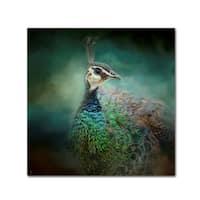 Jai Johnson 'Peacock 12' Canvas Art