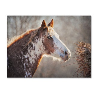 Jai Johnson 'No Sharing Horse' Canvas Art