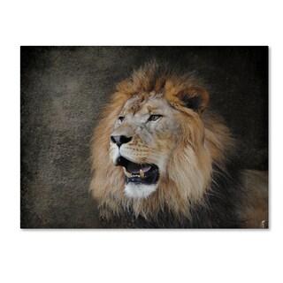 Jai Johnson 'Male Lion Portrait 2' Canvas Art