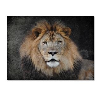 Jai Johnson 'Male Lion Portrait 1' Canvas Art
