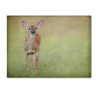 Jai Johnson 'Listening Ears White Tailed Fawn' Canvas Art