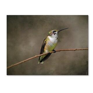 Jai Johnson 'Hummingbird Portrait' Canvas Art