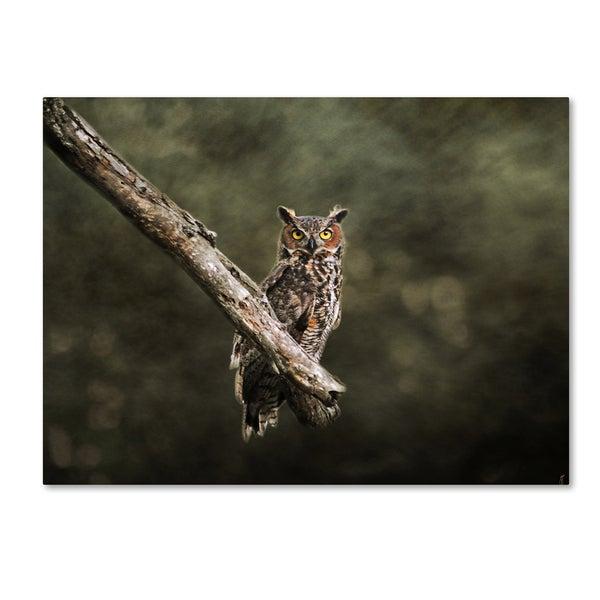 Shop Jai Johnson Great Horned Owl At Shiloh Canvas Art