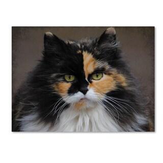 Jai Johnson 'Calico Cat Portrait' Canvas Art