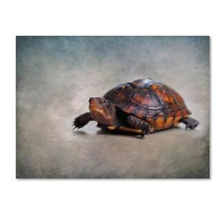 Jai Johnson 'Box Turtle Portrait' Canvas Art