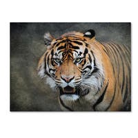 Jai Johnson 'Bengal Tiger' Canvas Art