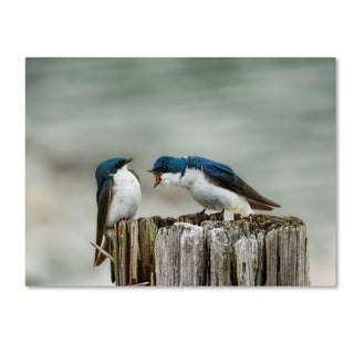 Jai Johnson 'Angry Swallows' Canvas Art