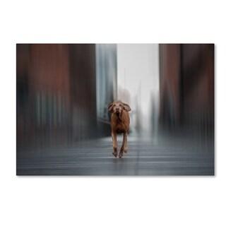 Run Like The Wind 'Run Like The Wind' Canvas Art