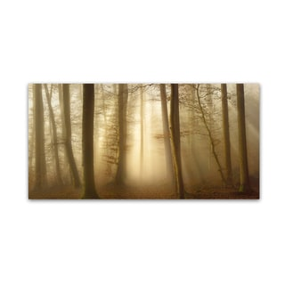 Norbert Maier 'Into The Trees' Canvas Art