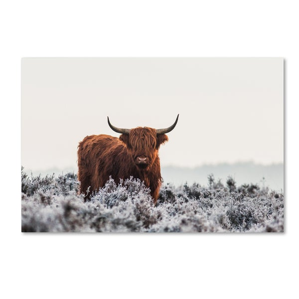 Jaap van den 'Highlander' Canvas Art