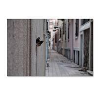 Ali Ayer 'Dantel Street Cat' Canvas Art
