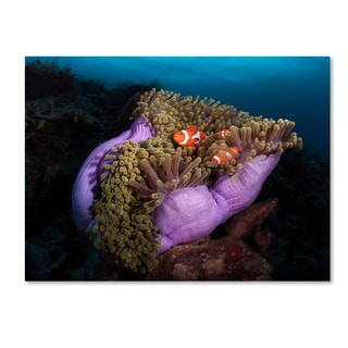 Marco Fierli 'Clown Fish With Magnificent Anemone' Canvas Art