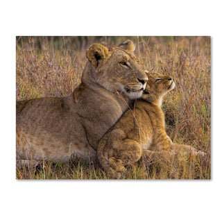 Henry Jager 'Baby Lion With Mother' Canvas Art