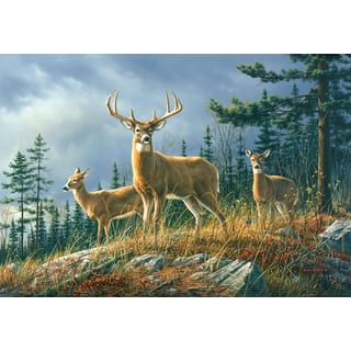 Autumn Whitetail Wall Mural|https://ak1.ostkcdn.com/images/products/16722850/P23036975.jpg?impolicy=medium