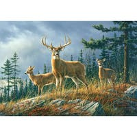 Autumn Whitetail Wall Mural