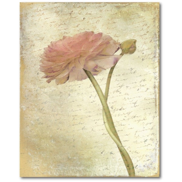 Courtside Market Ranunculus Bloom II Gallery Wrapped Canvas Wall Art - 16x20