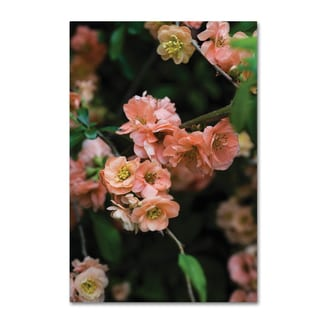 Kurt Shaffer 'Peachy Spring 2' Canvas Art