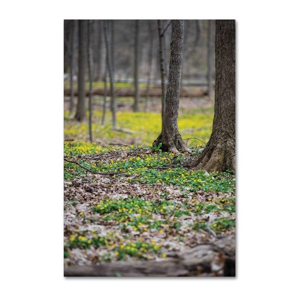 Kurt Shaffer 'Forest Floor of Gold' Canvas Art
