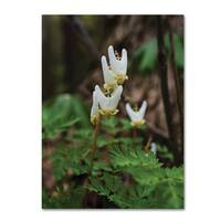 Kurt Shaffer 'Emerging Spring Wildflowers' Canvas Art