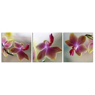 "Elementem Photography: ""Purple Flower"" Photography Print 3-Panel Panoramic Wall Art"