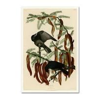 Audubon 'Fish Crowplate 146' Canvas Art