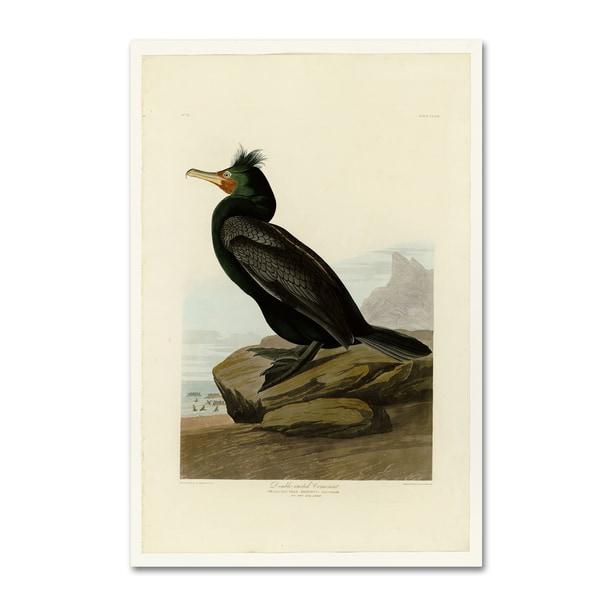 Audubon 'Doublecrested Cormorantplate 257' Canvas Art