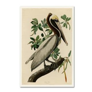 Audubon 'Brown Pelicanplate 251' Canvas Art