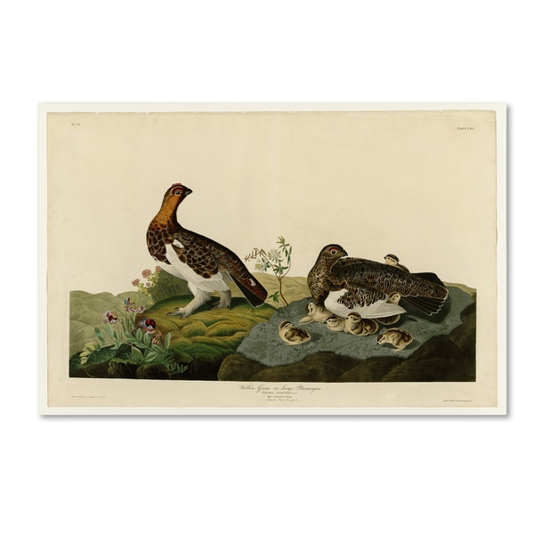 Audubon 'Willow Grouseplate 191' Canvas Art