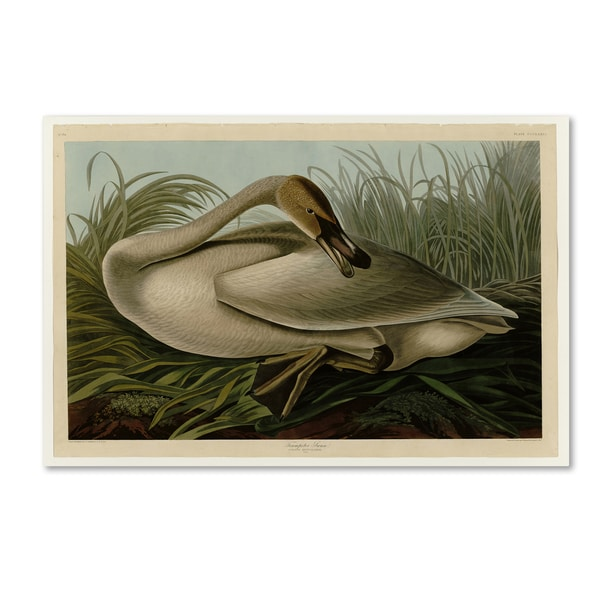 Audubon 'Trumpeterswanplate 376' Canvas Art