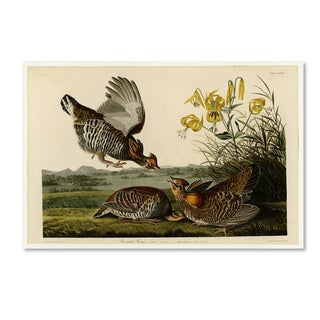 Audubon 'Pinnated Grouseplate 186' Canvas Art