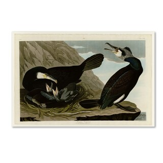 Audubon 'Common Cormorantplate 266' Canvas Art