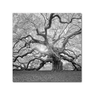 Moises Levy 'The Tree Square-BW 2' Canvas Art