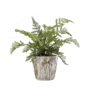 D&W Silks Lace Fern Plant in Rustic Terra Cotta Pot
