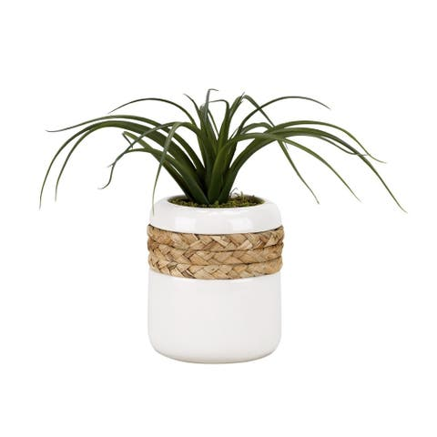 D&W Silks Curly Tillandsia in Round Ceramic Planter Wrapped in Rope