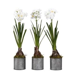 D&W Silks Paperwhite Bulbs in Round Tin Planters (Set of 3)