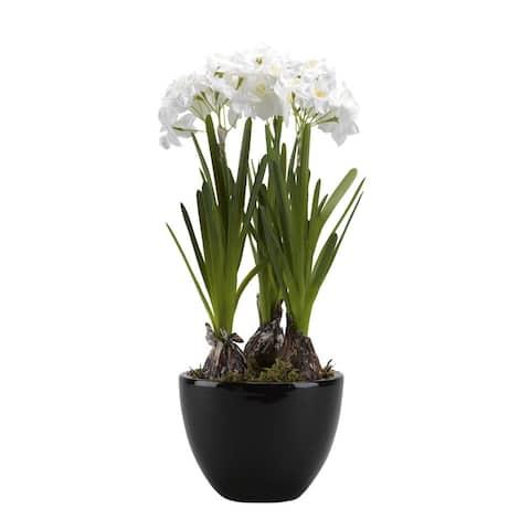 D&W Silks Paperwhite Bulbs in Round Ceramic Planter