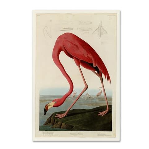 John James Audubon 'American Flamingo' Canvas Art