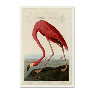 John James Audobon 'American Flamingo' Canvas Art