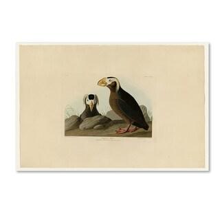 John James Audobon 'Tufted Auk' Canvas Art