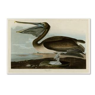 John James Audobon 'Brown Pelican' Canvas Art