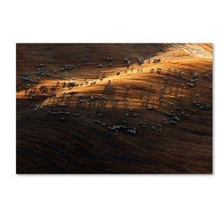 Massimo Della Latta 'Fields' Canvas Art
