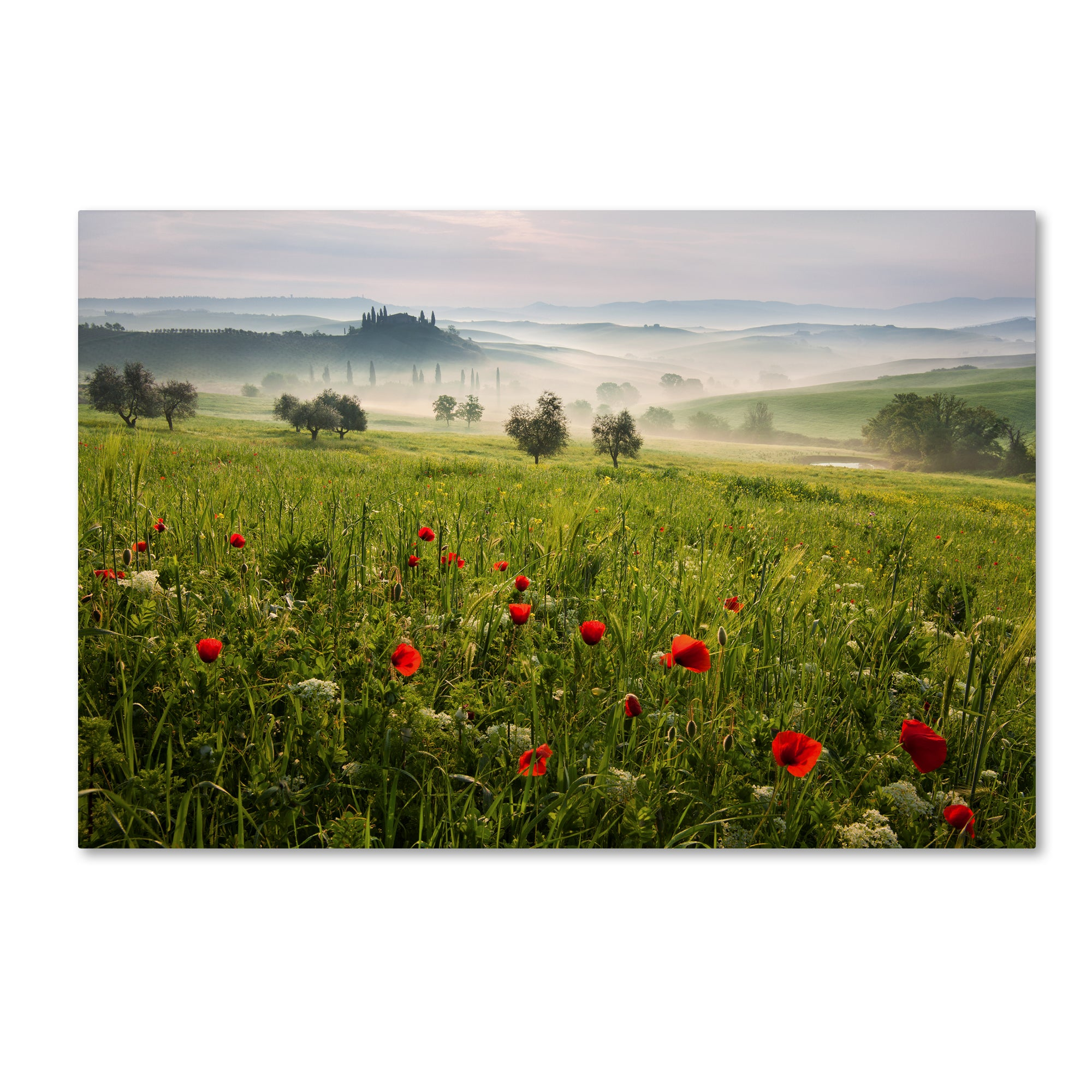 Daniel Rericha 'Tuscan Spring' Canvas Art (16x24), Red