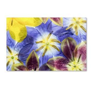 Mandy Disher 'Tulips' Canvas Art