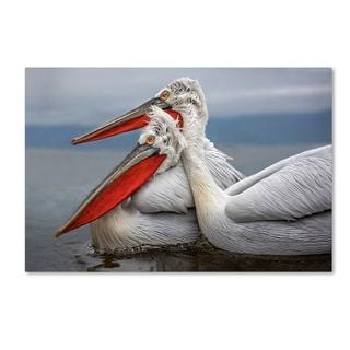 Xavier Ortega 'Dalmatian Pelicans' Canvas Art