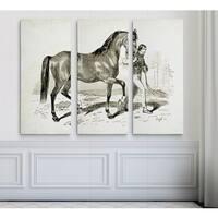 Equine Plate XXI