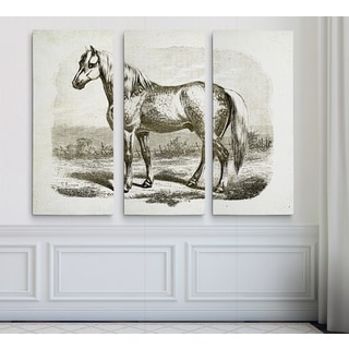 Equine Sketch VIII