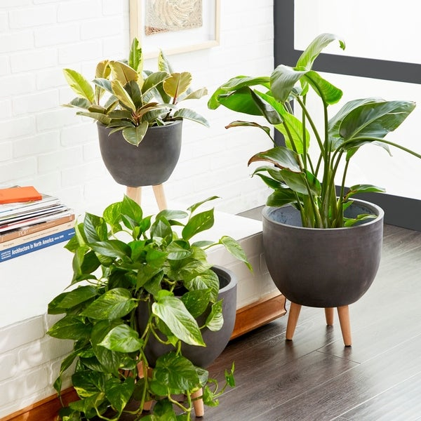 Set of 3 Modern Cup-Shaped Black Fiber Clay Planters by Studio 350